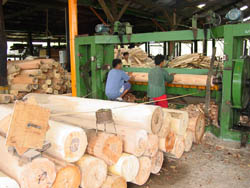 Philippine Forestry Bukidnon Forests Incorporated