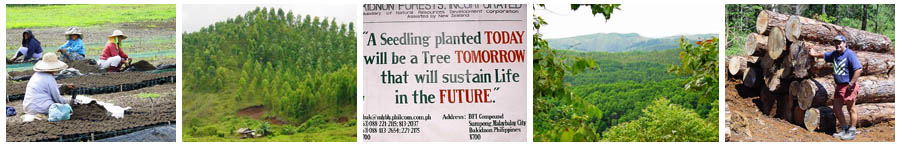 Philippine Forestry - Bukidnon Forests Incorporated situated at Malaybalay, Bukidnon Province, Mindanao - Caraga Farmers and Environmental Developers Multi Purpose Co-operative in region of Mindanao - Glenhill Consulting Limited